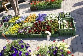 04 Záhradnícky trh 2013